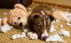 Dog mess