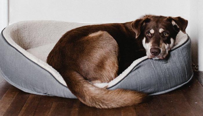 5 Best Indestructible Dog Beds in 2021
