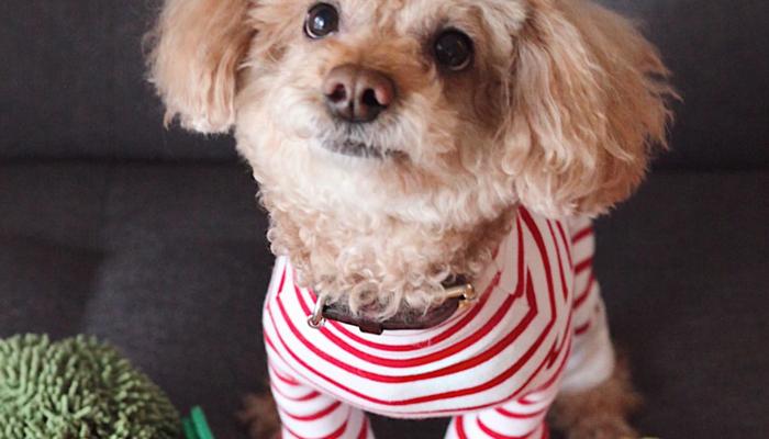 7 Best Dog Pajamas in 2021