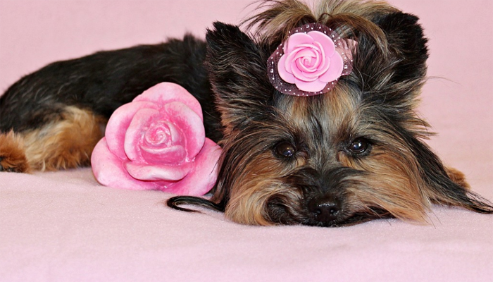 Ultimate Guide to Accessorizing Your Dog