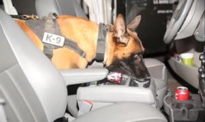 K9 dog inside the car
