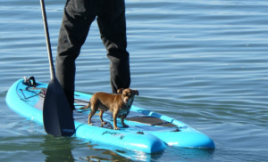 Man with dog on a paddle board