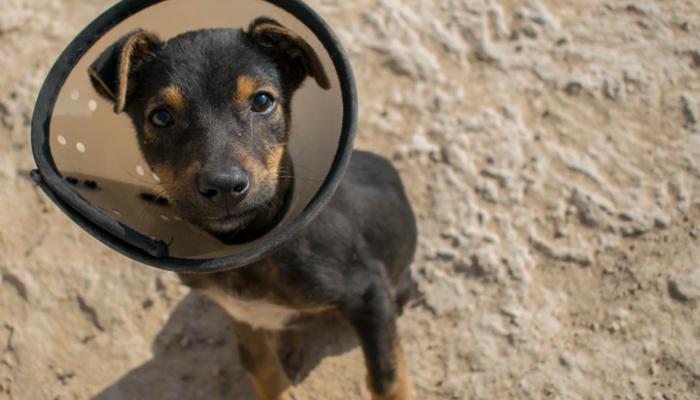 7 Best Dog Cones in 2021