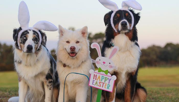 Best Dog Foods for Australian Shepherds in 2021