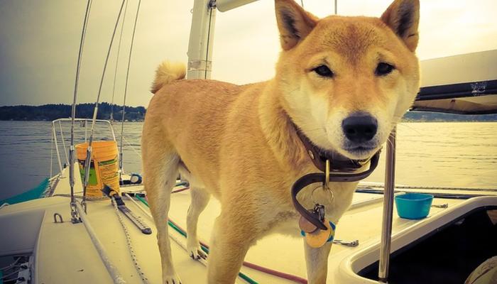 4 Best Dog Boat Ramps in 2021