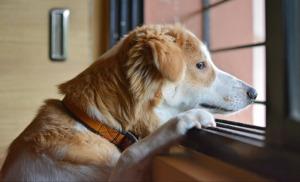 Dog on a window