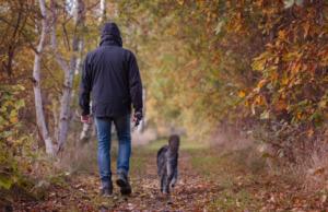 Man and Dog walking during autumn