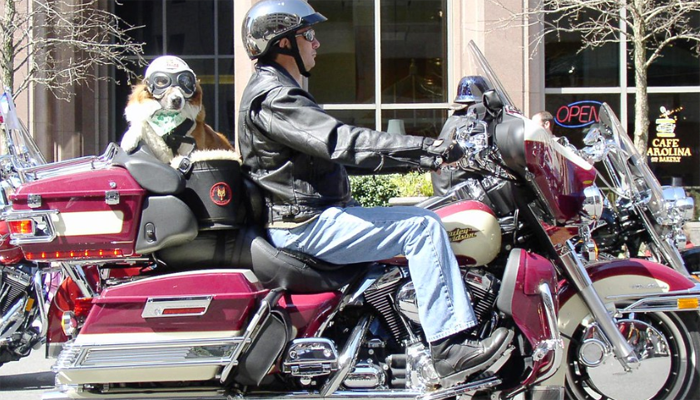 5 Best Dog Motorcycle Carriers in 2021