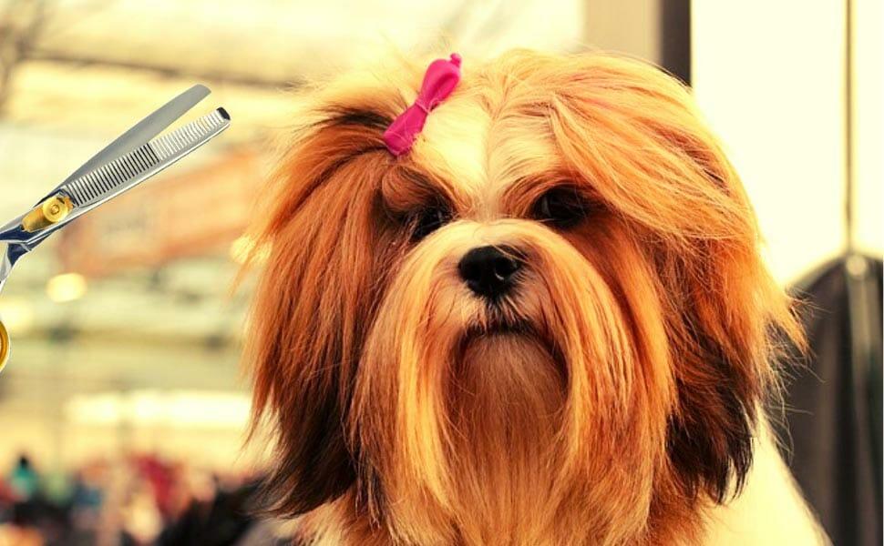 Benefits of Dog Thinning Shears