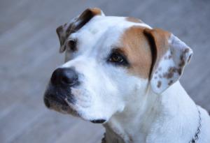 White Brown Dog