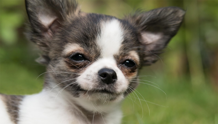 20 Best Low Maintenance Dog Breeds – Find the Perfect Fit!