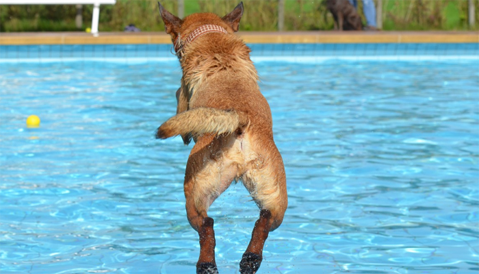 10 Best Dog Pools in 2021