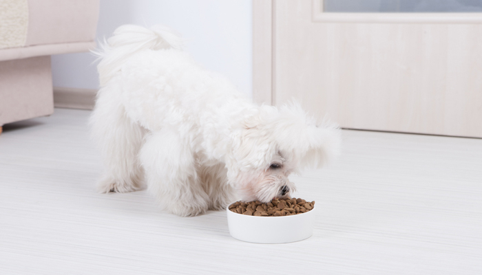 10 Best Foods for Maltese Dogs in 2021