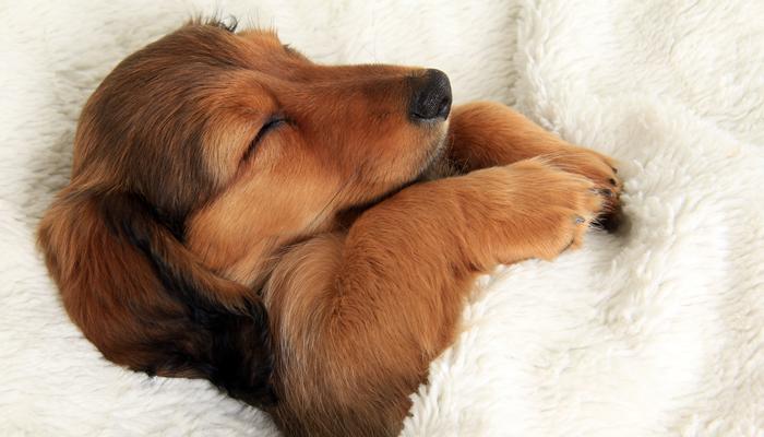 10 Best Chew-Proof Dog Blanket in 2021