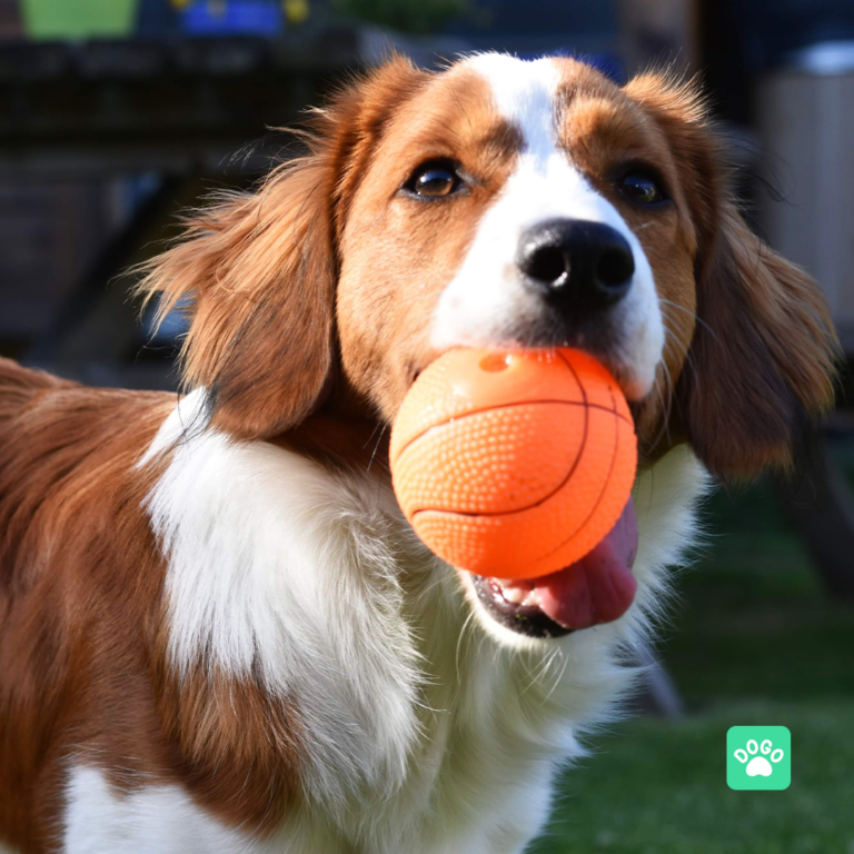 Benefits of Positive Dog Training