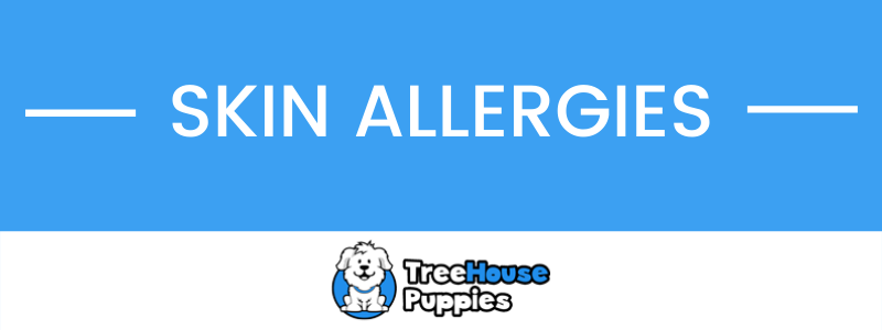 Dog Skin Allergies