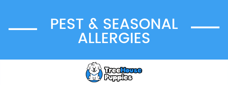 Dog Pest and Seasonal Allergies