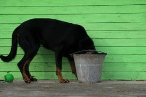 Top Reasons Why My Dog Won't Drink Water