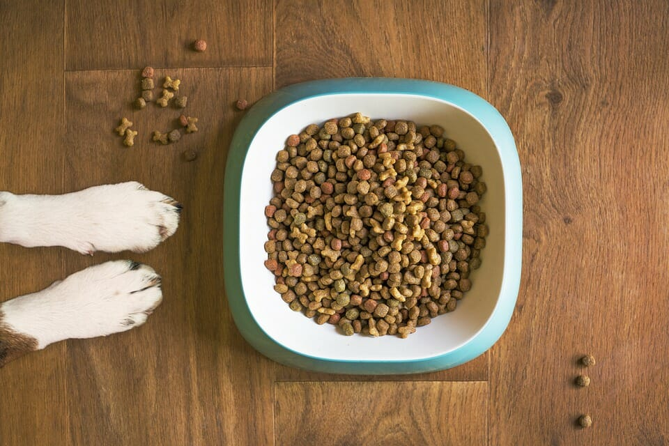 How to Tell if Dry Dog Food is Bad