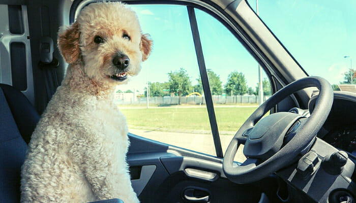Dog inside a car ready to be taken everywhere by his owner