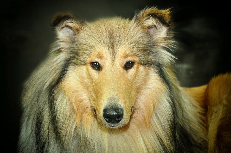 What Can I Call My Male Dog?