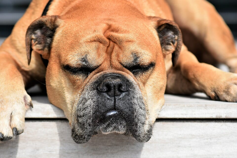 What to Do If My Dog Ate Bad Dog Food?