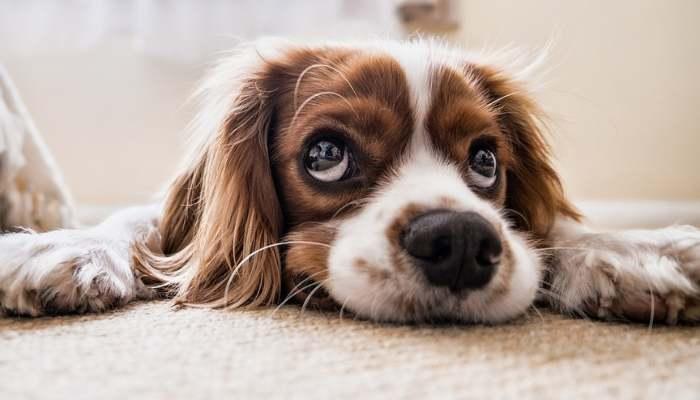 How Often Do Puppies Poop?