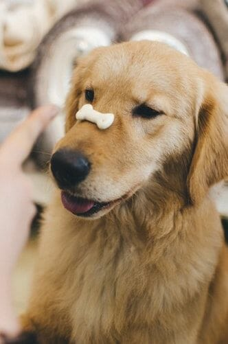 A Dog's Digestive Process