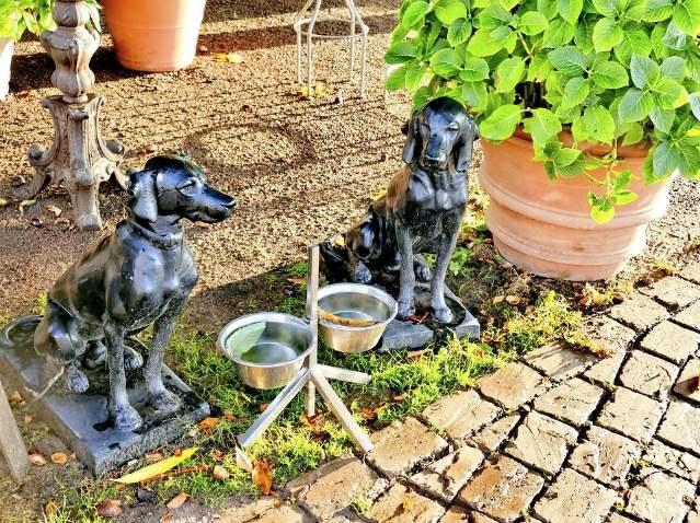 Dog drinking bowls