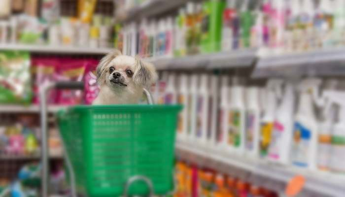 Are Dogs Allowed In Walmart?