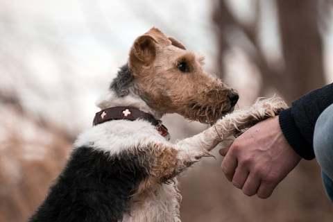 Dog putting paw on mans hand