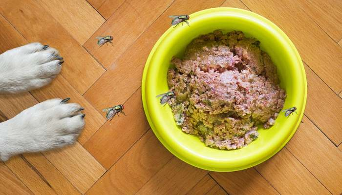 How to Keep Flies Away From Dog Food