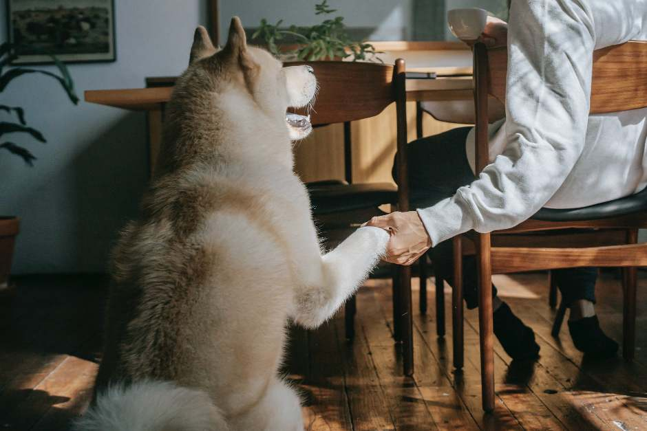 Man sitting at a table holding paw of a white dog