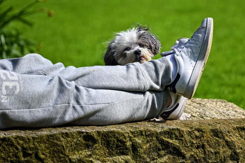 The Most Common Reason Your Puppy Bites Your Feet
