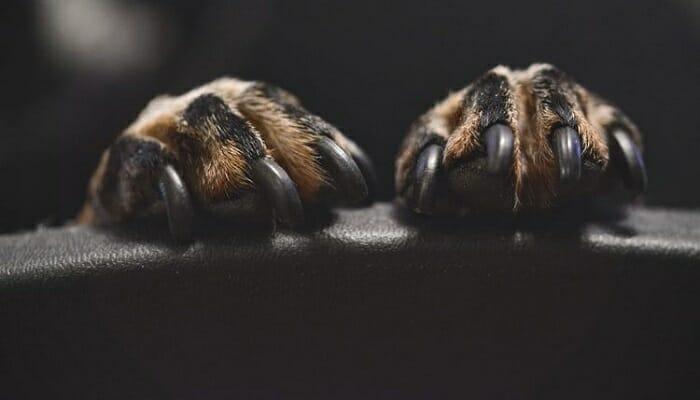 How Long Should Dog Nails Be