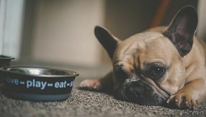 Why Your Dog Won't Eat