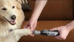 A man dremeling a white dog