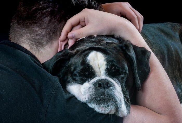 A man preparing his dog for a nail gremeling