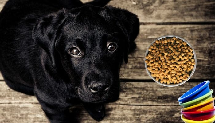 How Many Cups of Dry Kibble in a Pound?