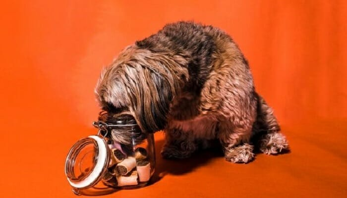 Brown dog licking treats on a jar that acts as automatic feeder