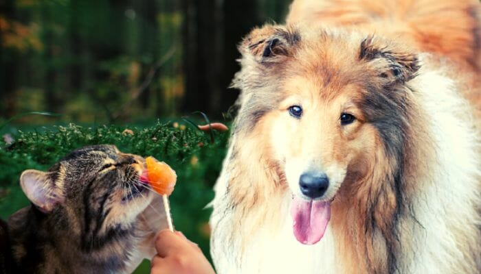 Can a Dog Eat Cat Food?
