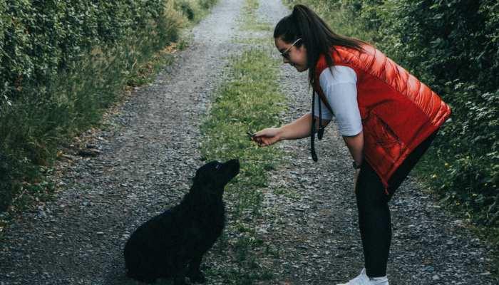 Dachschund treat during training