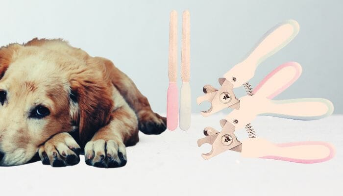 Dog beside nail files and nail clippers