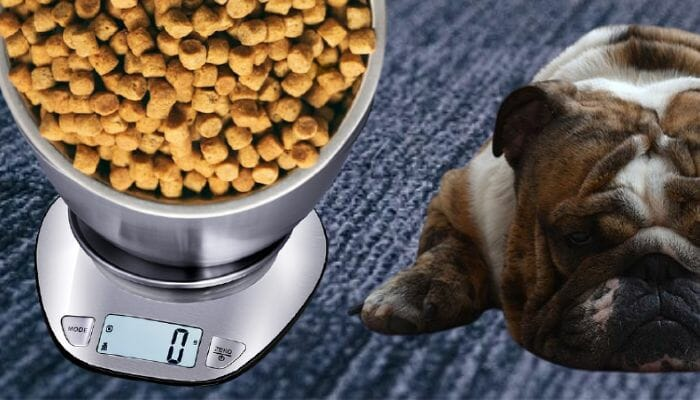 How Many Cups of Dog Food in a Pound