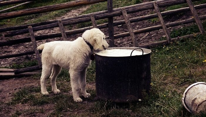 Milk or Yogurt