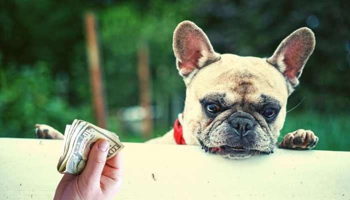How Much Does a Frenchie Cost?