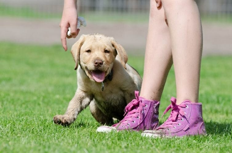 How to Potty Train A Lab Puppy Potty Training Outdoors