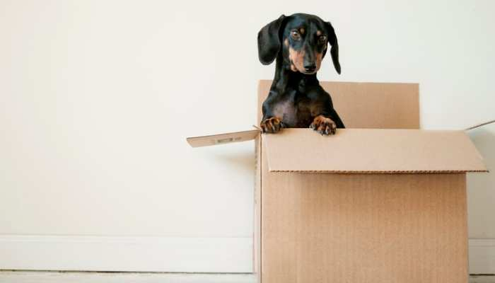 What You Need to Welcome Dachshund Puppies Home