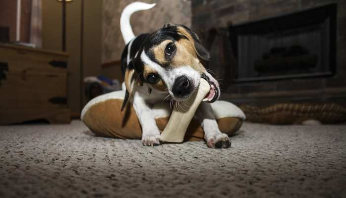 Why Do Dogs Like Bones