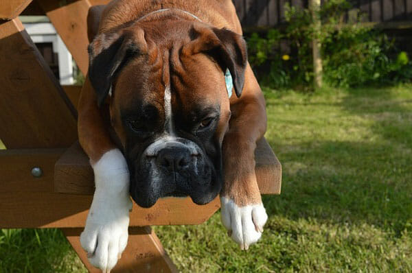 Why Is It Important To Know Your Dog's Weight?